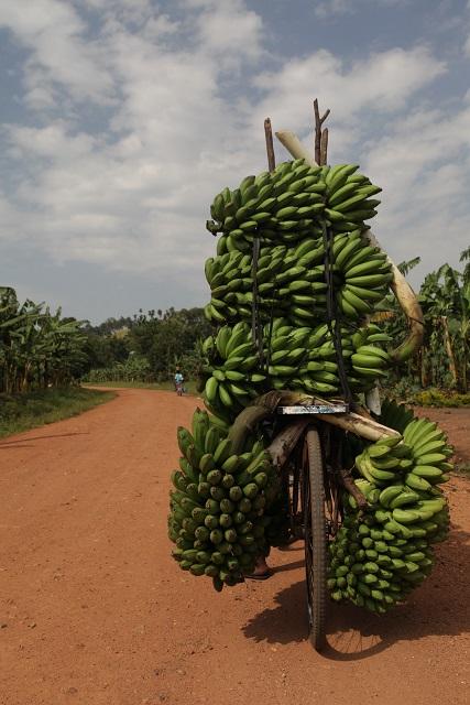 Bananenfahrrad