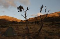 Erzraabe bewacht mein Zelt