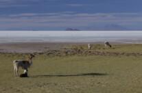 am Ufer der Salar de Uyuni