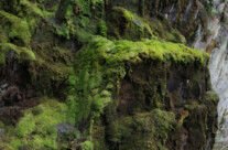 Wand aus Moos