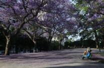 Parco San Martìn