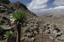 Am Gipfel des Ras Bwahit