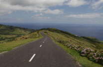 Road to Nowhere, Flores