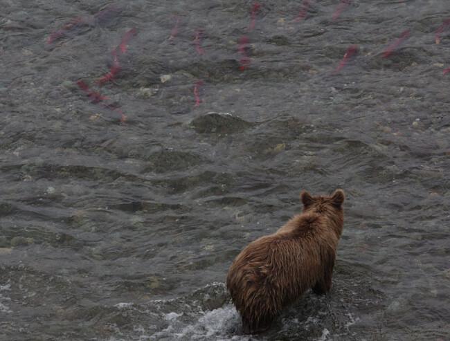 wenn die Fische davonschwimmen