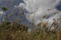 Sardinische Wiese