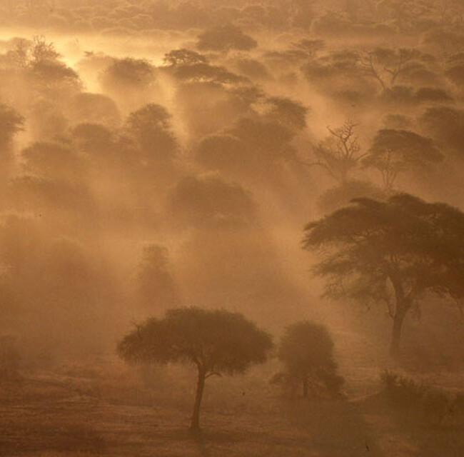 A Morning in Africa