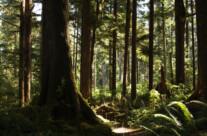 Rainforest, Olympic NP
