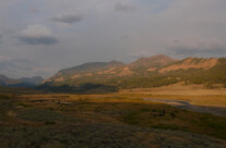 Buffaloes am Soda Butte Creek